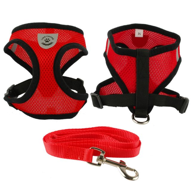 Buying a Small Dog Harness