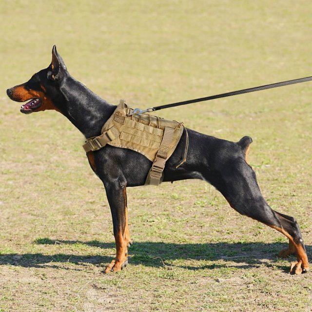 Tactical Dog's Training Vest Harness