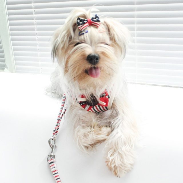 Striped Harness and Leash Sets for Dogs