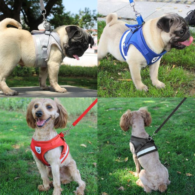 Dog Harness and Leash Sets