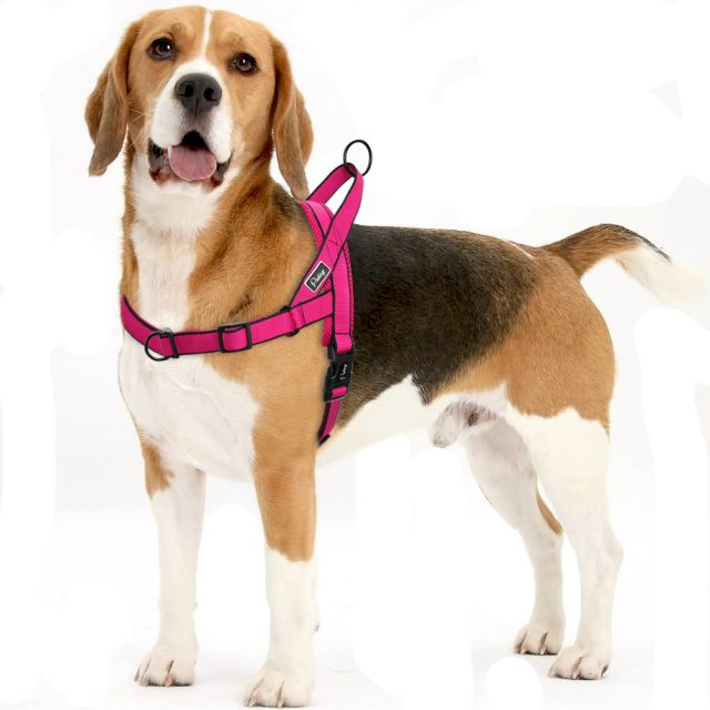 Soft Nylon Dog Harness