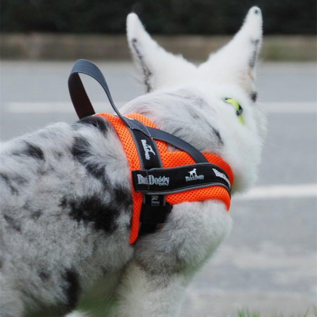 Reflective Dog's Training Harnesses