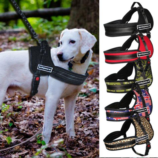 Training Nylon Dog's Harness