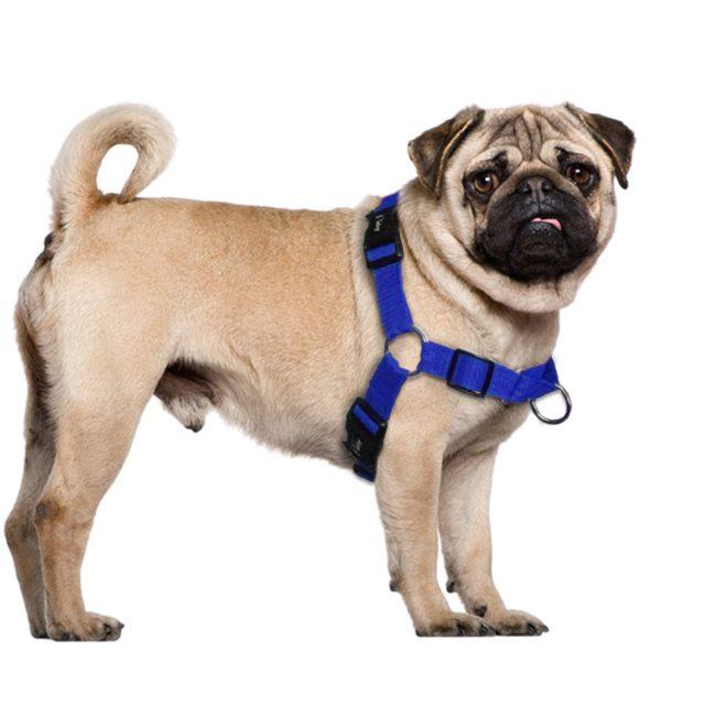 Walking Nylon Dog's Harness