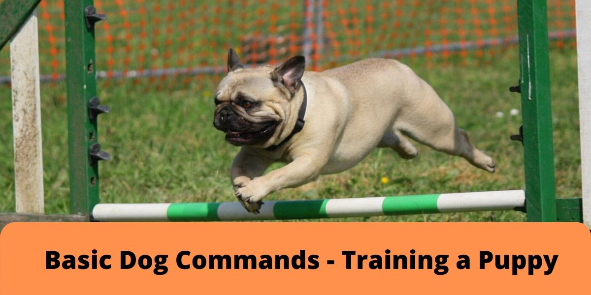 Basic Dоg Commands Training a Puрру min